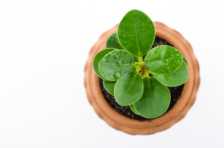plantlife: Baby plant in small flower pot. Isolated on white background. Space for text.