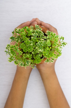 Hands and plant on white background photo