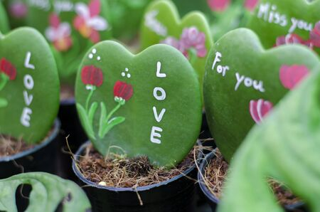 Valentine heart shaped leaves photo