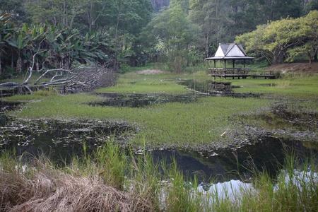nature lake photo