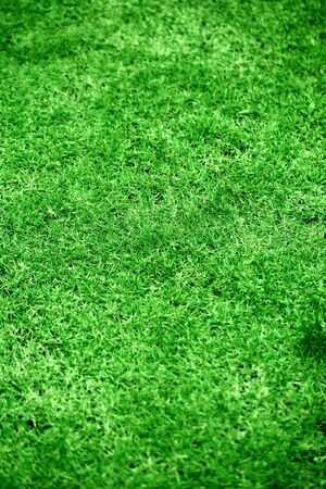 Grass background Stock Photo - 10046988