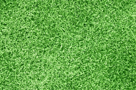 grass Stock Photo - 10024574