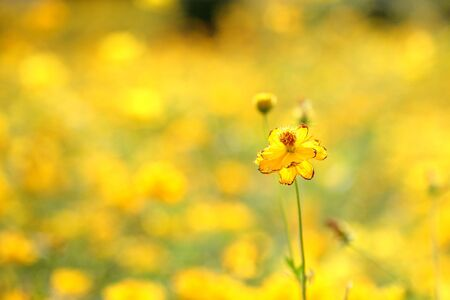 beautiful yellow flower  photo