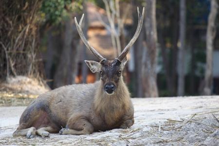 Deer sitting on nature photo