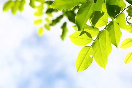 green leave with blue sky photo