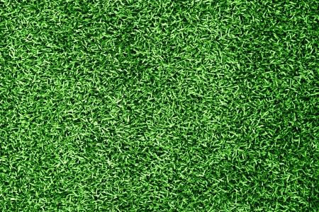 grass blackground Stock Photo - 10196011