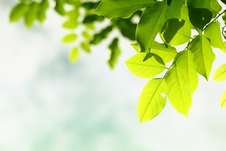 green leaf background Stock Photo - 10264564