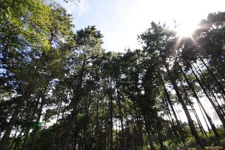 long tree photo