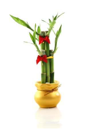 bamboo isolated in white background