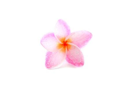 pink flower isolated in white background with water drop photo