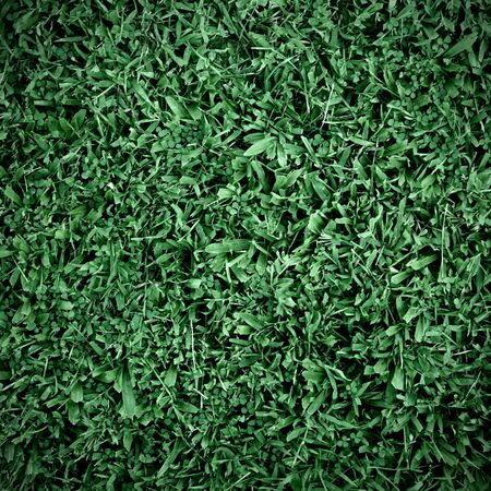 grass background photo