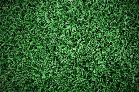 grass background Stock Photo - 10786240