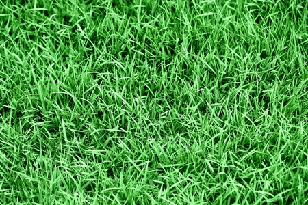 turf background photo