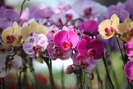 orchid garden Stock Photo - 11915906