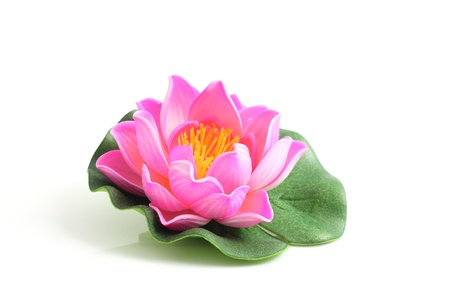 pink lotus: pink lotus isolated in white background Stock Photo
