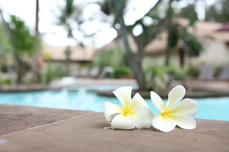 Tropical flowers Swimming pool photo