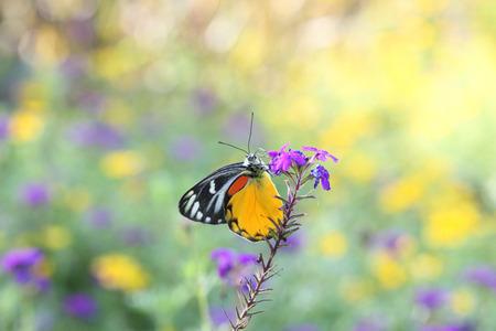 giant sunflower: Butterfly