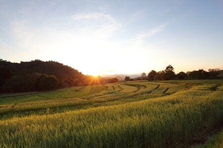 sunny fields photo