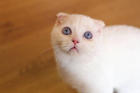 persian cat photo