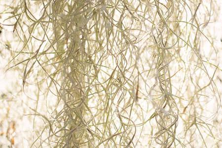 herbage: flowers of herbage background