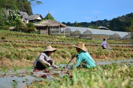 horticulturist: Women planter