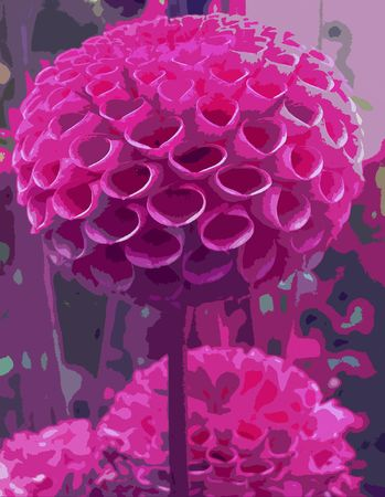 abstract picture with pink dahlia flower in bloom photo