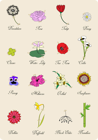 flower sketch: set of vintage flowers