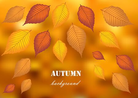 falling leaves: autumn background with falling leaves