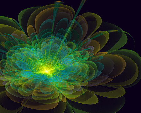 white lilly: bright fractal flower