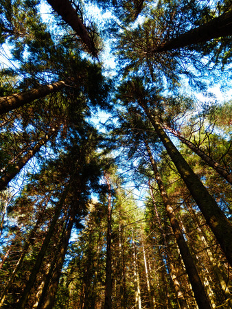color photography: color photography of sunny forest Stock Photo