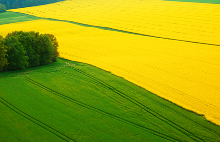 oilseed: oilseed rape fields and meadows from top view Stock Photo