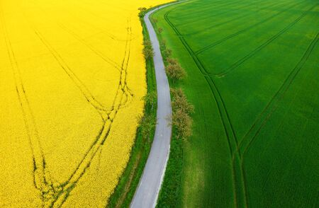 color photography of blooming rape plants field and green cereal field with road in the middle