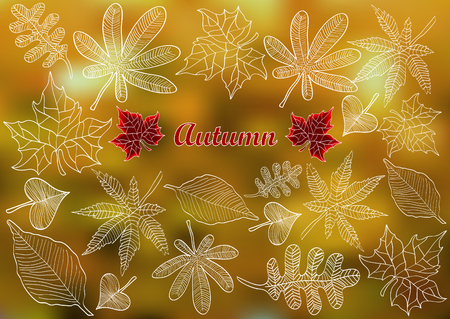 autumnal: color vector autumnal background with leafs