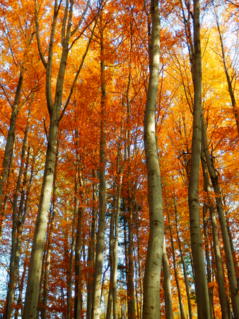 color photography: color photography of shiny autumn forest
