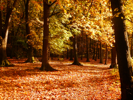 color photography: color photography of autumn forest Stock Photo