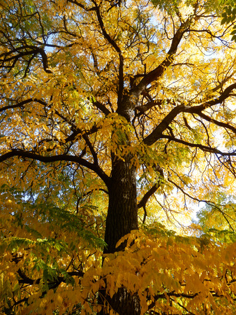 color photography: color photography of golden autumnal tree Stock Photo