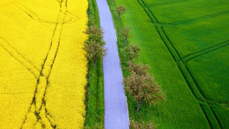 photgraphy: canola flower field and grain field