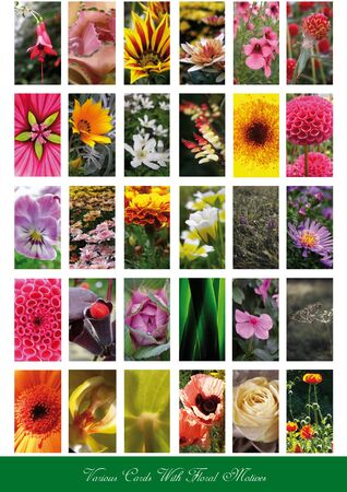 guzmania: set of cards with different flowers