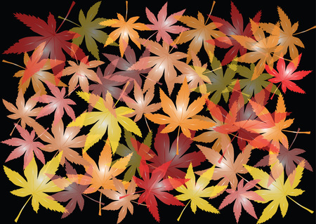 color autumn maple leaves on black background