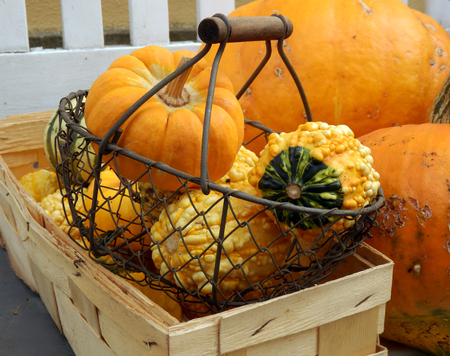 color autumnal still life with pumpkin and basket on vintage wooden bench