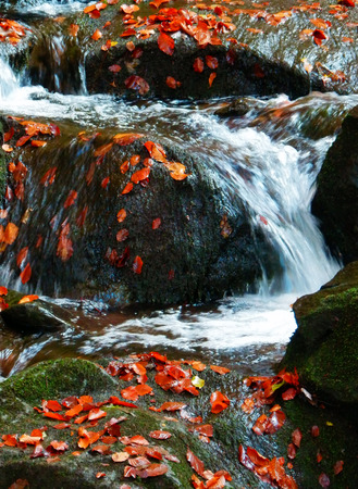color detail of waterfall with stones and autumnal beech leaves Stok Fotoğraf