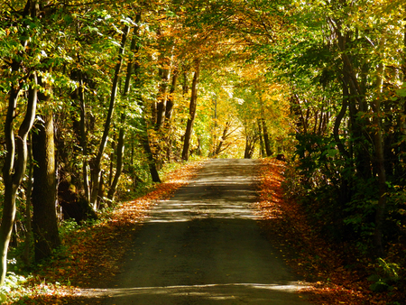 color photo of beautiful autumnal tunnel of trees Stok Fotoğraf