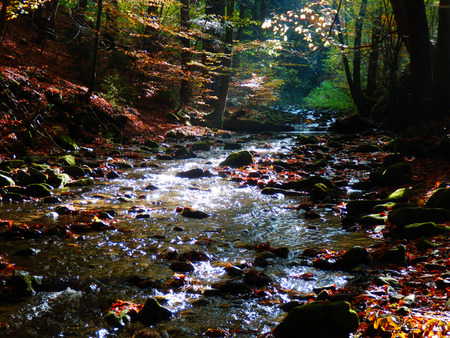 color detail of sunrise in beautiful autumnal forest with clear stream