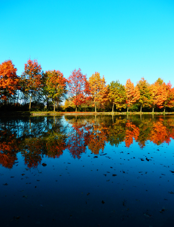 Colorful autumnal trees reflected on water and blue sky