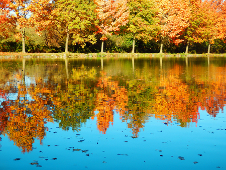 Beautiful autumnal trees reflected on clear lake
