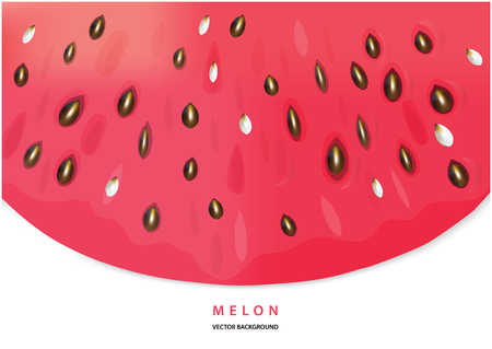 Color vector watermelon illustration with place for your text. realistic vecto water melon slice with place for your text.