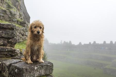 Sad doggy in Machu Picchu Stock Photo