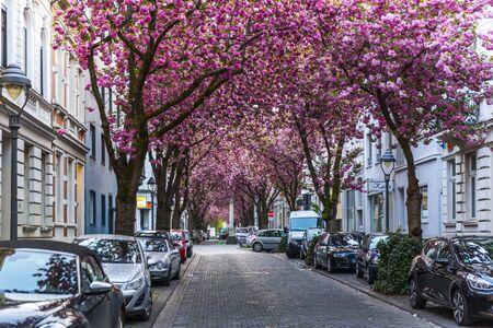 BONN, GERMANY - APRIL 21, 2018: Heerstrasse or Cherry Blossom Avenue
