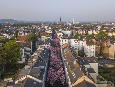 BONN, GERMANY - APRIL 21, 2018: Aerial view of Heerstrasse or Cherry Blossom Avenue Editorial