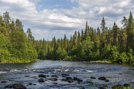 Pine forest and river in Oulanka national park, northern Finland